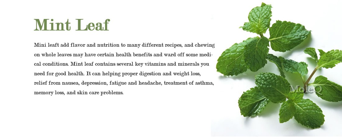 mint leaf benefits
